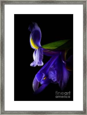 Forgotten Dreams Framed Print