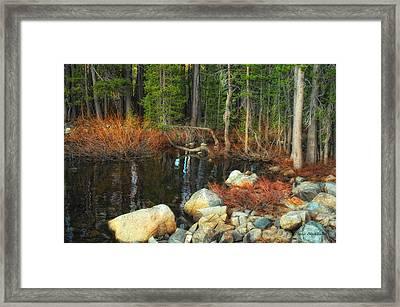 Forgotten Forest Framed Print by Donna Blackhall