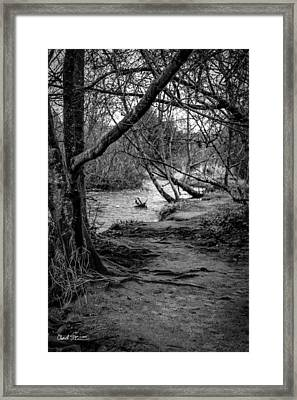 Forgotten Path Framed Print by Charlie Duncan