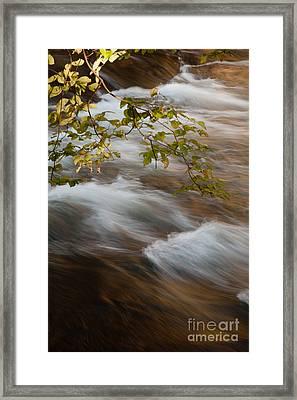 Fork River Framed Print by Iris Greenwell