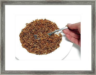 Fork With Plate Of Mealworm Framed Print