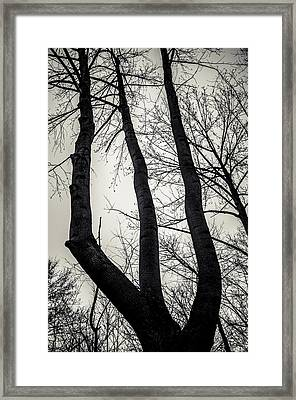 Forked Framed Print by Off The Beaten Path Photography - Andrew Alexander