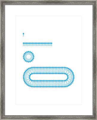 Formation Of Biological Membranes Framed Print