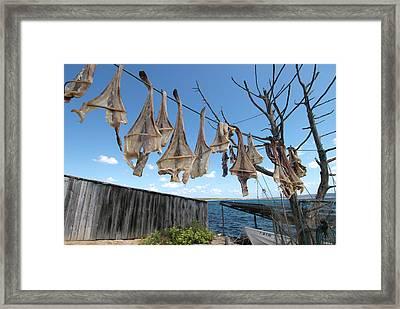 Formenteras Dried Fish - Peix Sec De Framed Print