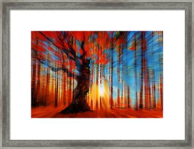 Forrest And Light Large Framed Print by Tony Rubino