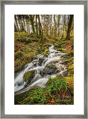 Forest Stream Framed Print by Adrian Evans