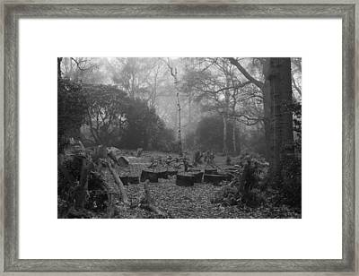 Framed Print featuring the photograph Forset Trees by Maj Seda