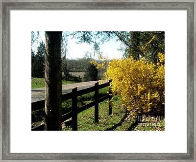 Forsythia Along The Highway Framed Print