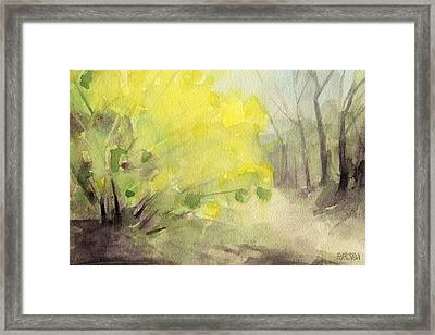 Forsythia In Central Park Watercolor Landscape Painting Framed Print by Beverly Brown