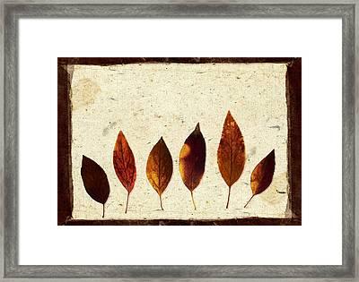 Forsythia Leaves In Fall Framed Print