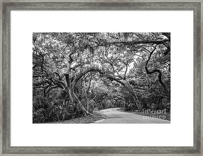 Fort Clinch Live Oaks Framed Print by Dawna  Moore Photography