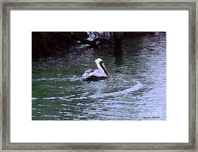 Framed Print featuring the photograph Fort Pierce Pelican by Megan Dirsa-DuBois