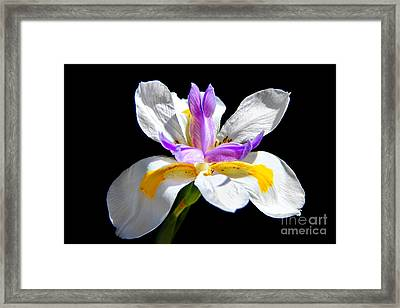 Fortnight Lily Framed Print by Mariola Bitner