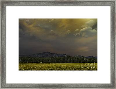 Fortuitous Framed Print by Mitch Shindelbower