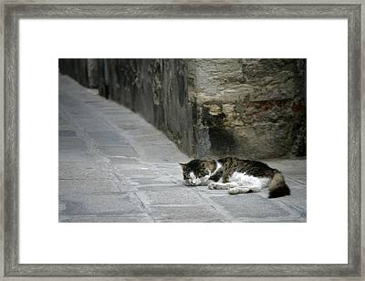 Forty Winks Framed Print