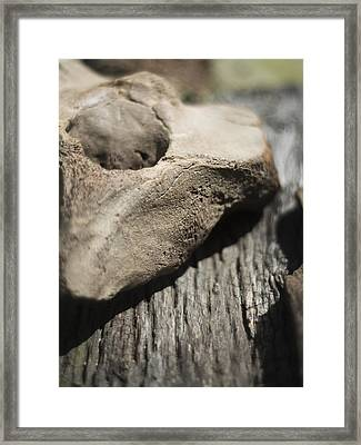 Fossil Bone With Weathered Wood Framed Print by Rebecca Sherman