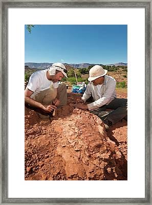 Fossil Excavation Framed Print