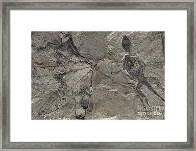 Fossil Lizard And Leaf Framed Print by James L. Amos