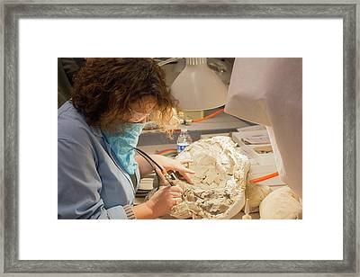 Fossil Preparation Framed Print by Jim West