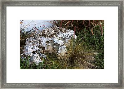 Fossil Rock Framed Print by Linda Phelps