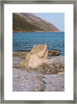 Fossil Tree Stump Framed Print by David Parker