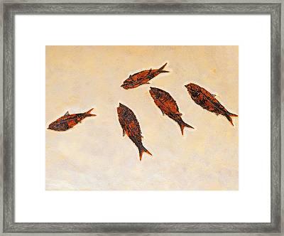 Fossilized Fishbritish Columbia Canada Framed Print by Thomas Kitchin & Victoria Hurst