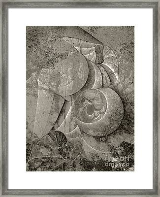 Fossilized Shell - B And W Framed Print