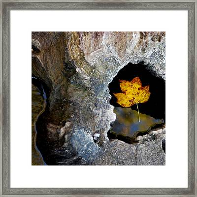 Found A Home Framed Print by Art Block Collections