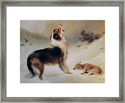 Found Framed Print by Albrecht Schenck