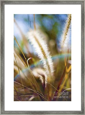 Fountain Grass Framed Print