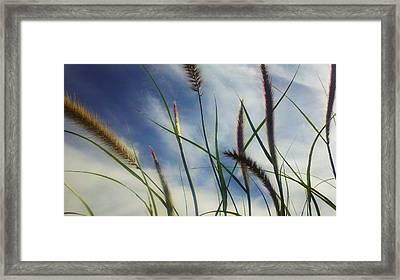 Framed Print featuring the photograph Fountain Grass by Richard Stephen