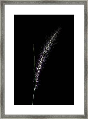 Fountain Grass Spike Framed Print