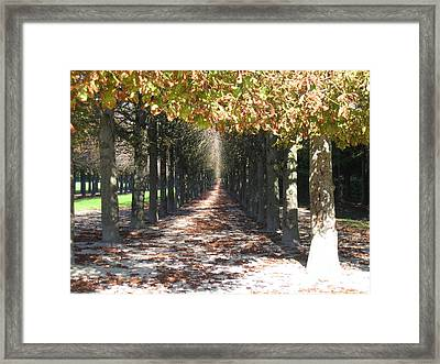 Fountainebleau - Under The Trees Framed Print