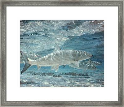 Four Bonefish Up With The Tide, 1972 Framed Print by Stanley Meltzoff / Silverfish Press