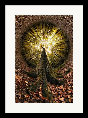 Fisheye Framed Prints