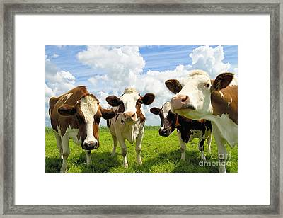 Four Chatting Cows Framed Print