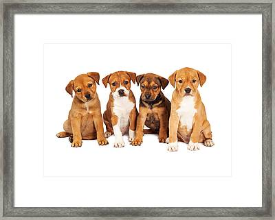 Four Cute Puppies Together Framed Print by Susan Schmitz