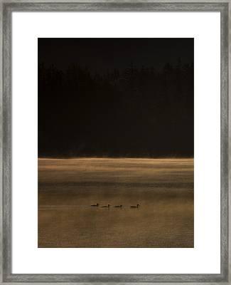 Four Ducks Framed Print