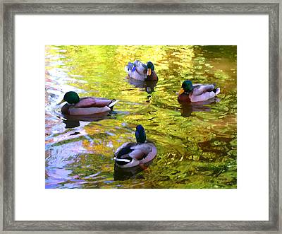 Four Ducks On Pond Framed Print