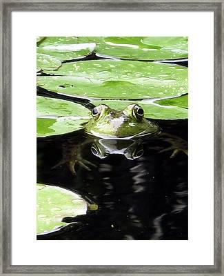 Four Eyed Frog Framed Print by Darryl  Kravitz
