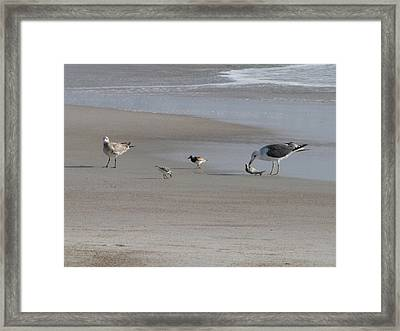 Four Feathers And A Fish Framed Print by Ellen Meakin