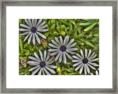 Four Flowers Framed Print