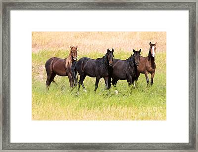 Framed Print featuring the photograph Four Friends by Vinnie Oakes