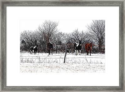 Four Horses Framed Print