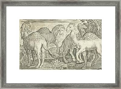 Four Humpbacks, Nicolaes De Bruyn Framed Print by Nicolaes De Bruyn