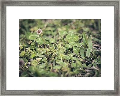 Four Leaf Clover Framed Print by Heather Applegate