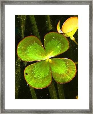 Four Leafed Clover Framed Print