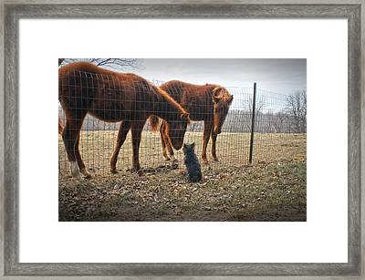 Four Legged Neighbors Framed Print by Don Wolf