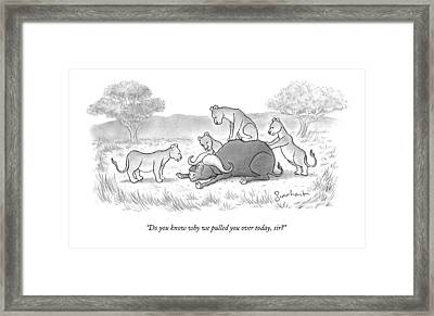 Four Lionesses Who Tackled A Water Ox Framed Print