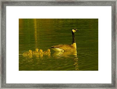 Four Little Miracles Framed Print by Jeff Swan